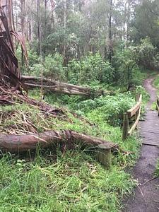 Kburra Botanic Gardens 0398