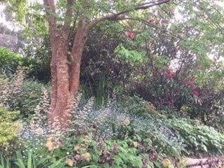 Open Gardens day Lorna Treacy