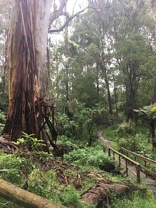 Kburra Botanic Gardens 0399
