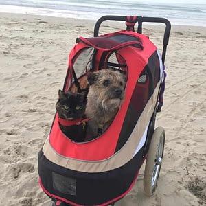 pets in a stroller