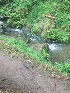 Kburra Botanic Gardens 0380